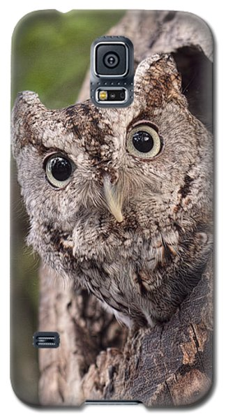 Galaxy S5 Case featuring the photograph Peek A Boo by Cheri McEachin