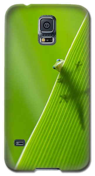 Galaxy S5 Case featuring the photograph Peek A Boo Gecko by Christina Lihani