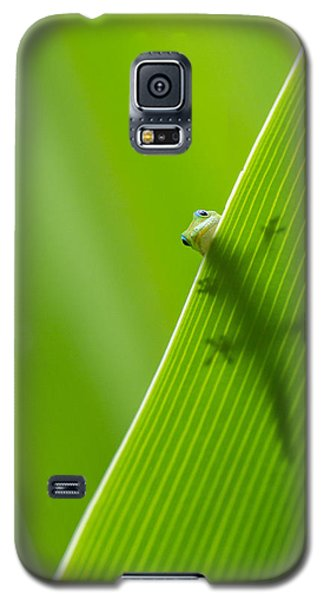 Peek A Boo Gecko Galaxy S5 Case