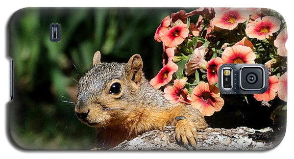 Peek-a-boo Squirrel Galaxy S5 Case