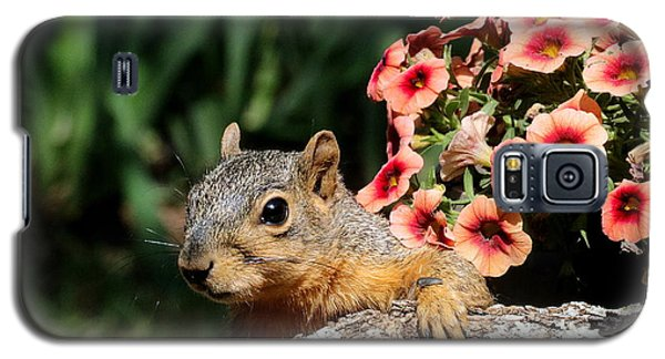 Peek-a-boo Squirrel Galaxy S5 Case