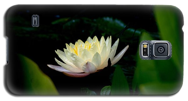 Peekaboo Lemon Water Lily Galaxy S5 Case