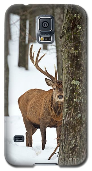 Galaxy S5 Case featuring the photograph Peekaboo.. by Nina Stavlund
