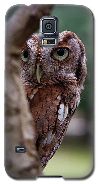 Galaxy S5 Case featuring the photograph Peekaboo Pablo by Arthur Dodd