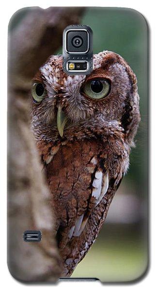 Peekaboo Pablo Galaxy S5 Case