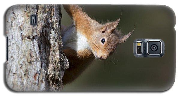Peekaboo - Red Squirrel #29 Galaxy S5 Case