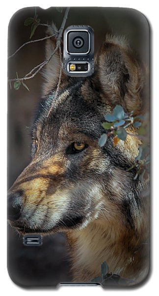 Peeking Out From The Shadows Galaxy S5 Case by Elaine Malott