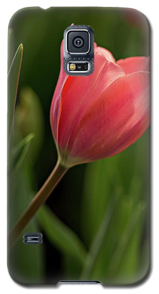 Galaxy S5 Case featuring the photograph Peeking Tulip by Mary Jo Allen