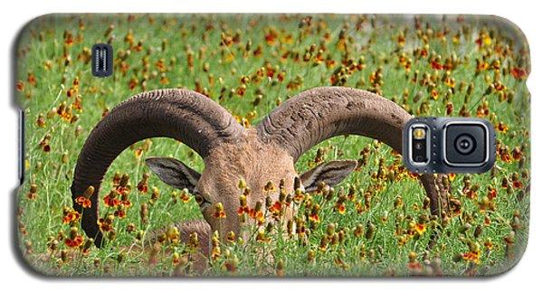 Peep-eye Galaxy S5 Case