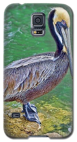 Pelican By The Pier Galaxy S5 Case
