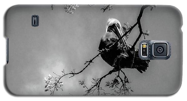 Pelican Connection Galaxy S5 Case