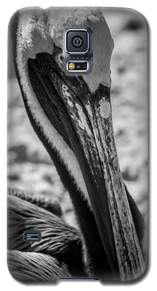 Galaxy S5 Case featuring the photograph Pelican In Florida by Jason Moynihan