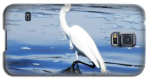 Pelican In It's Glory Galaxy S5 Case