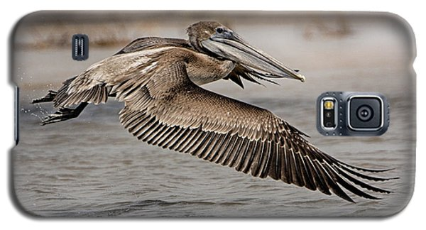 Pelican In The Air Galaxy S5 Case