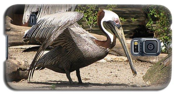 Pelican Island Galaxy S5 Case