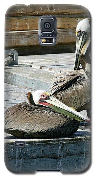 Pelican On The Dock Galaxy S5 Case