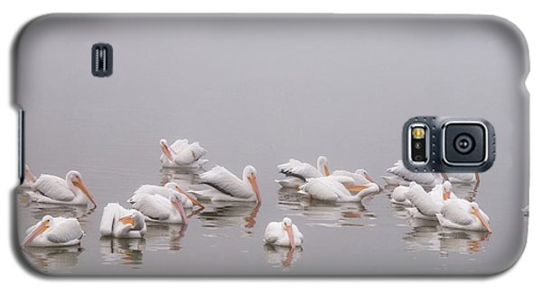 Pelicans On The Lake Galaxy S5 Case by Carolyn Dalessandro