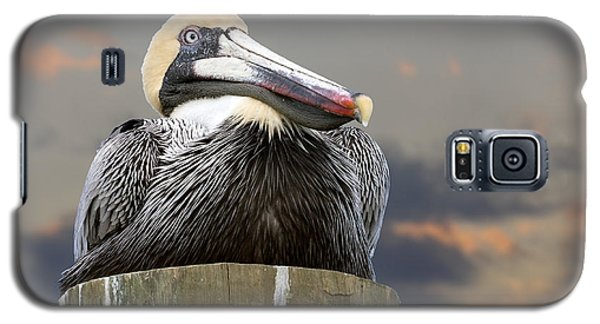 Pelican Perch Galaxy S5 Case by Betty Denise
