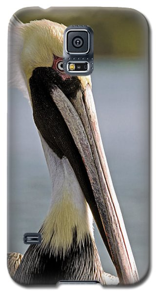 Galaxy S5 Case featuring the photograph Pelican Portrait by Sally Weigand