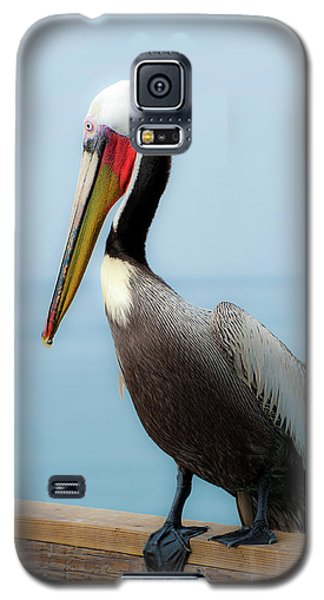 Pelican Portrait Galaxy S5 Case