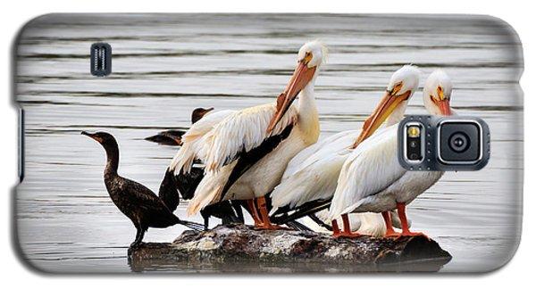 Pelicans And Cormorants Galaxy S5 Case