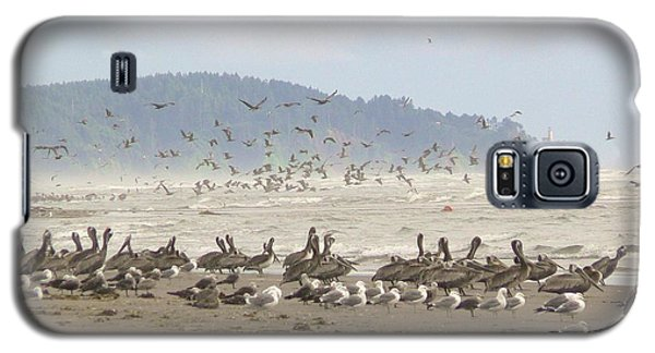 Pelicans And Gulls Galaxy S5 Case by Pamela Patch