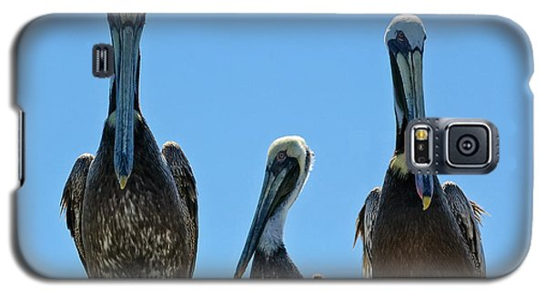 Pelicans At The Kure Beach Fishing Pier 2006 Galaxy S5 Case