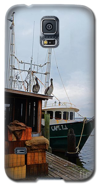 Pelicans Looking For Lunch Galaxy S5 Case