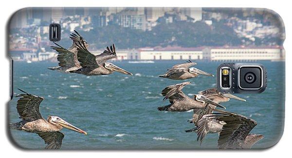 Pelicans Over San Francisco Bay Galaxy S5 Case