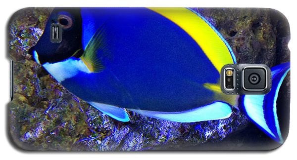 Blue Tang Fish  Galaxy S5 Case