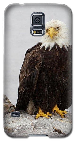 Perched Bald Eagle Galaxy S5 Case