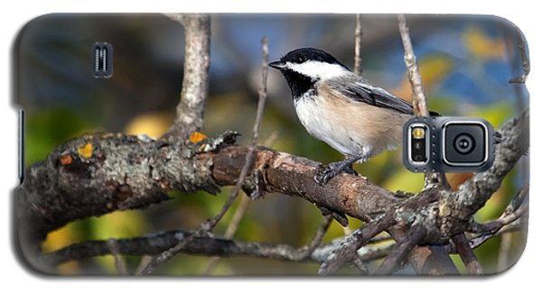 Perched Black-capped Chickadee Galaxy S5 Case