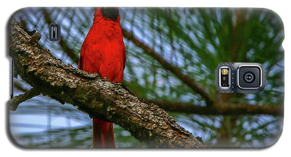 Perched Cardinal Galaxy S5 Case
