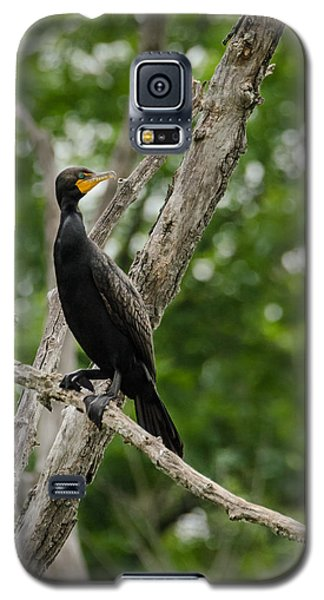 Perched Double-crested Cormorant Galaxy S5 Case