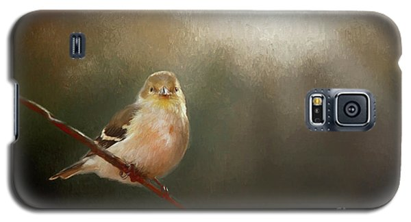 Galaxy S5 Case featuring the photograph Perched Goldfinch by Darren Fisher