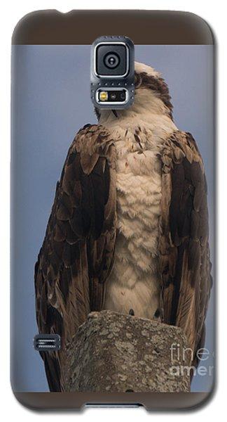 Perched Hawk Galaxy S5 Case