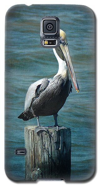 Perched Pelican Galaxy S5 Case by Carla Parris