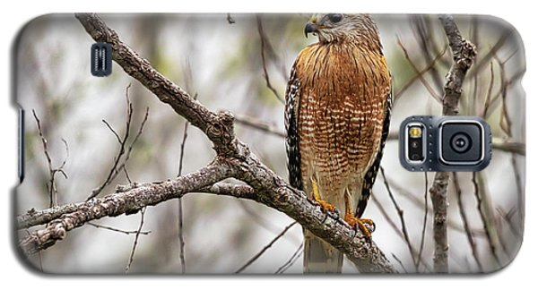 Perched Red Shouldered Hawk Galaxy S5 Case