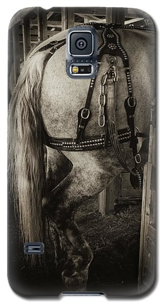 Percheron Draft Horse Galaxy S5 Case by Theresa Tahara