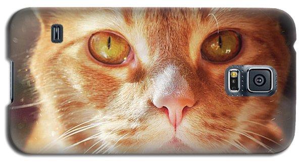 Percy In The Sun Galaxy S5 Case