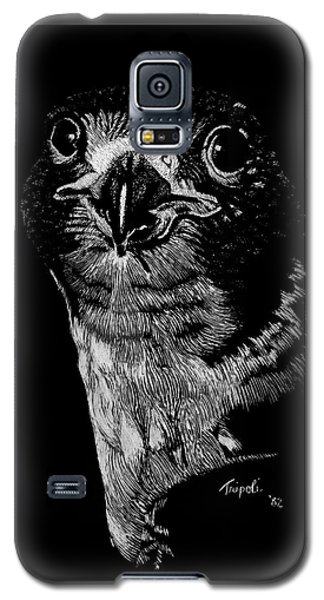 Peregrin Falcon Galaxy S5 Case by Lawrence Tripoli