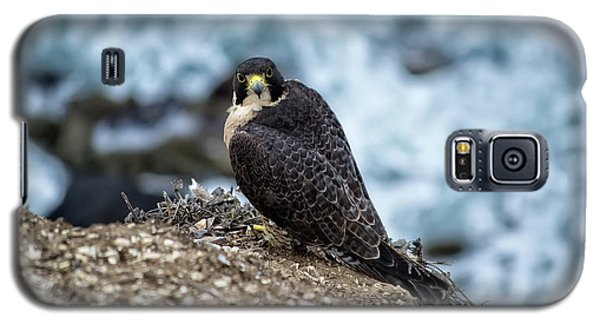 Peregrine Falcon - Here's Looking At You Galaxy S5 Case