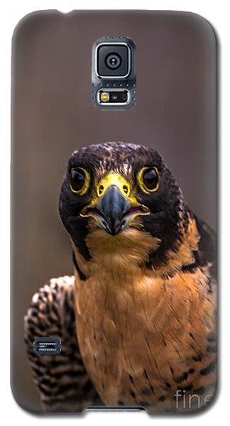 Peregrine Falcon Profile 2 Galaxy S5 Case