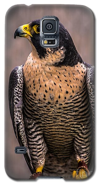 Peregrine Falcon Profile Galaxy S5 Case