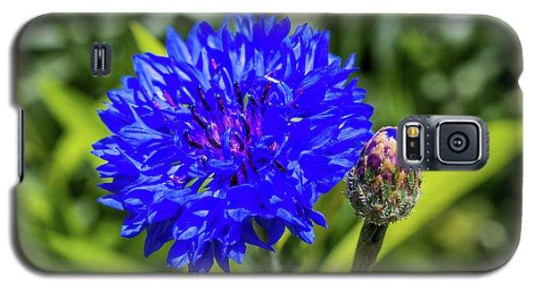 Perky Cornflower Galaxy S5 Case