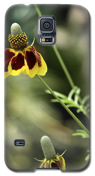 Perky Yellow Galaxy S5 Case by Barbara Middleton
