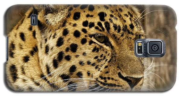 Galaxy S5 Case featuring the photograph Pesive by Gary Bridger