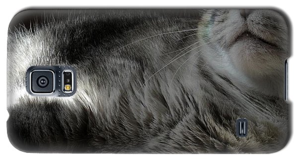 Pet Portrait - Lily Three Galaxy S5 Case by Laura Wong-Rose