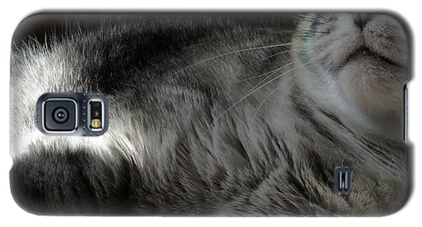 Pet Portrait - Lily Three Galaxy S5 Case
