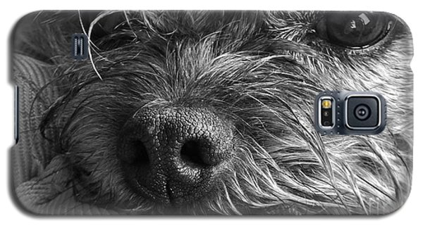 Pet Portrait - Puck II Galaxy S5 Case